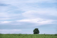 Baum alleine stock abbildung