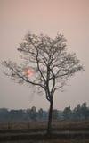 Baum alleine Stockfotografie