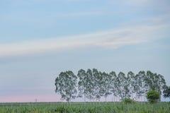 Baum alleine Lizenzfreies Stockfoto
