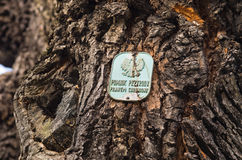 Baum als Naturdenkmal in Polen Stockbild