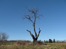 Baum alt Stockfotografie
