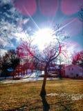Baum in Atchison Kansas durch mein Haus Stockbilder