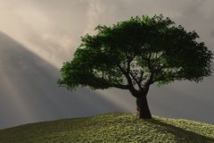 Baum auf Abhang Stockbilder
