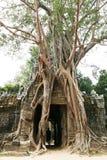 Baum auf Angkor Ruinen Stockfotos