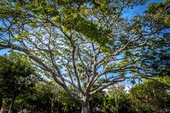 Baum auf Barichara, Santander, Kolumbien Lizenzfreie Stockfotos