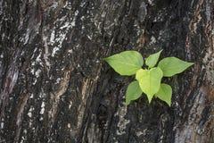 Baum auf Baum Lizenzfreie Stockfotos