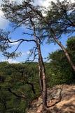 Baum auf Bergabhang lizenzfreie stockfotografie