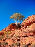 Baum auf Bergabhang Lizenzfreies Stockbild