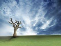 Baum auf blauem Himmel stockbild