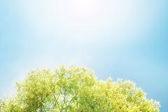 Baum auf blauem Himmel Lizenzfreie Stockfotografie