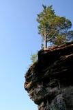 Baum auf dargestellten Felsen Stockbild