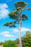 Baum auf dem azurblauen Himmel Stockfoto
