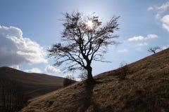 Baum auf dem Berg-bjelasnica nahe Sarajevo Stockfotos