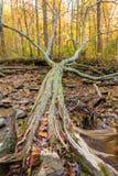 Baum auf dem Boden Stockfotos