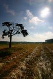 Baum auf dem Feld Lizenzfreie Stockfotos