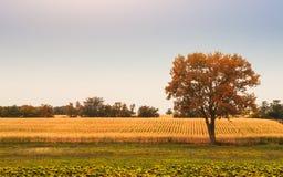 Baum auf dem Feld Stockfotografie