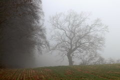 Baum auf dem Feld im Nebel Lizenzfreies Stockfoto