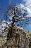 Baum auf dem Felsen Stockfoto