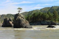 Baum auf dem Felsen Lizenzfreie Stockfotos