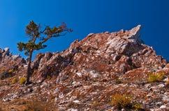 Baum auf dem Felsen Stockbilder