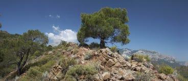 Baum auf dem felsigen Hügel Stockbild