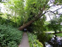 Baum auf dem Fluss Lizenzfreies Stockbild