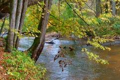 Baum auf dem Flussufer, Baumaste, die über dem Waldfluß hängen Lizenzfreies Stockbild