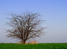 Baum auf dem Gebiet Lizenzfreie Stockfotografie