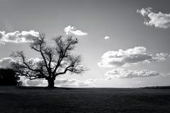 Baum auf dem Gebiet Stockbild