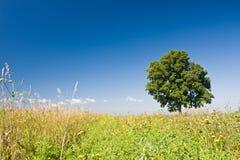 Baum auf dem Gebiet Stockfotografie