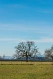 Baum auf dem Gebiet in der Landschaft am Tag Stockbilder