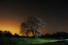 Baum auf dem Gebiet und den Sternen oben Lizenzfreie Stockfotos