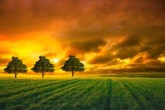 Baum auf dem Gebiet und orange Himmel Lizenzfreies Stockbild