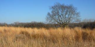 Baum auf dem Grasland Stockbild