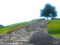 Baum auf dem Hügel Lizenzfreie Stockfotos