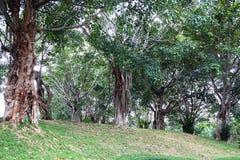 Baum auf dem Hügel Stockfotos