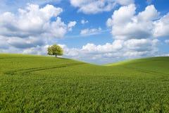 Baum auf dem Hügel Lizenzfreie Stockbilder
