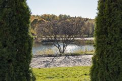 Baum auf dem Hintergrund des Teichs, gestaltet durch Büsche im Park stockbilder