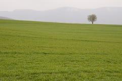 Baum auf dem Horizont stockfotos