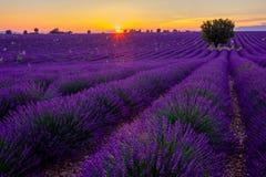 Baum auf dem Lavendelgebiet bei Sonnenuntergang stockfotos