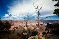 Baum auf dem Rand des Grand Canyon stockbilder