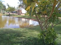 Baum auf dem Seeufer stockfoto