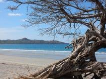 Baum auf dem Strand Stockfoto