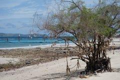 Baum auf dem Strand Lizenzfreie Stockbilder