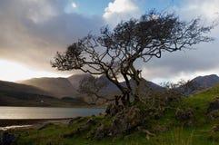 Baum auf dem Ufer lizenzfreie stockbilder