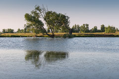Baum auf dem Ufer des Teichs Stockbild