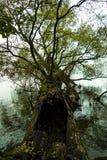 Baum auf dem Wasser Stockfotos