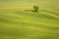 Baum auf dem Weizengebiet Stockfotos