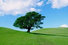 Baum auf den Hügeln Stockbilder