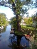Baum auf der Bank des Kanals Stockfotos